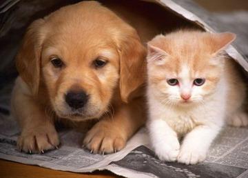 梦见猫和狗