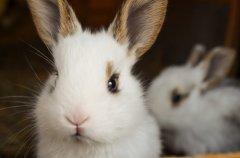 2023年哪个月份适合生兔宝