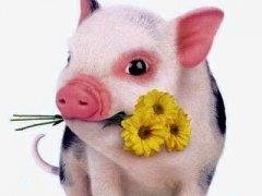 生肖猪的最佳婚配是怎样的
