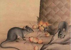 不同年份出生的属鼠人2020年有什么本命年禁忌是不能触碰的?