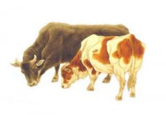 2021年属牛本命年佩戴什么