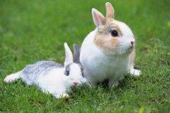 属兔的人在2020年下半年(农历7月-12月)每月运势详解