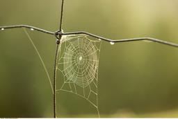 梦见蜘蛛网
