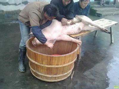 梦见别人杀猪