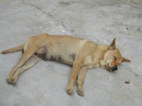 梦见把狗打死了