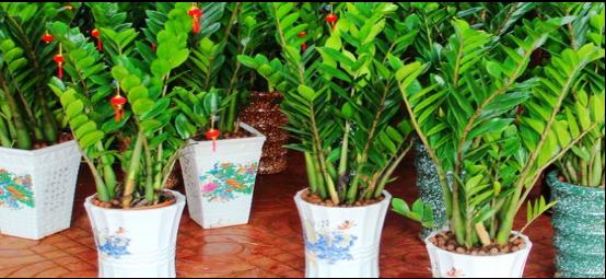 办公室植物摆放