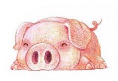 屬豬人的性格是怎樣的