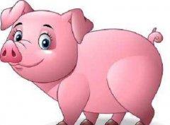 2019年屬豬本命年人生多少歲是一個坎?