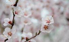 2019年农历三月黄道吉日好日子是哪几天?