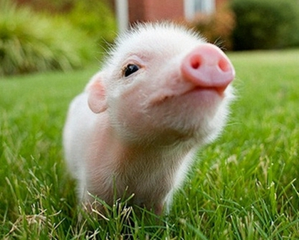 2020年95年26歲屬豬的人運勢運程精準解析!_水墨先生