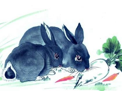 Image result for 屬兔