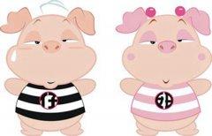 1971年出生屬豬人2021年運勢女性 50歲生肖豬女在2021年運氣如何